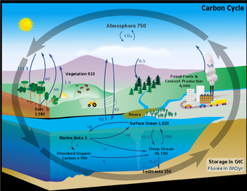 Nutrient cycles taiga coniferous forest in the diagram above it demonstrates the carbon cycle the carbon cycle is actually a big necessity in the taiga biome because of the large vegetation ccuart Gallery